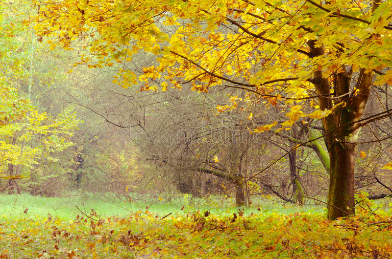 Changing colors of the forest. Vintage autumn season landscape in the Tiszalok Arboretum in Hungary. Hungarian countryside. Fallen yellow leaves royalty free stock photos