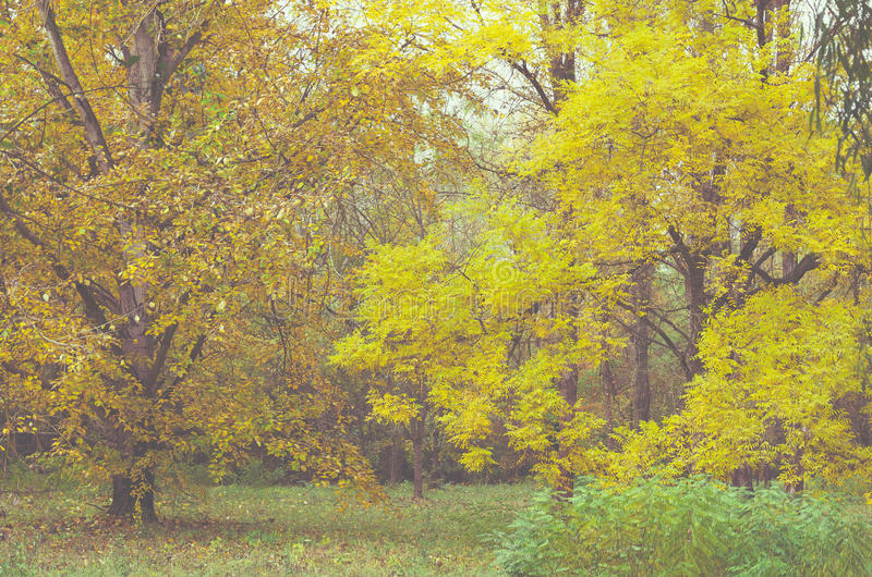 Changing colors of the forest. Vintage autumn season landscape in the Tiszalok Arboretum in Hungary. Hungarian countryside. Fallen yellow leaves royalty free stock image
