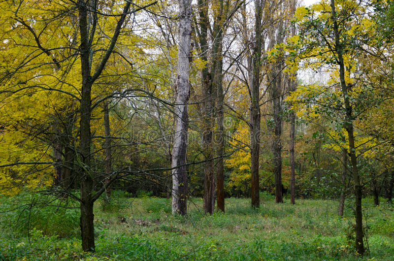 Changing colors of the forest. Vintage autumn season landscape in the Tiszalok Arboretum in Hungary. Hungarian countryside. Fallen yellow leaves royalty free stock photography