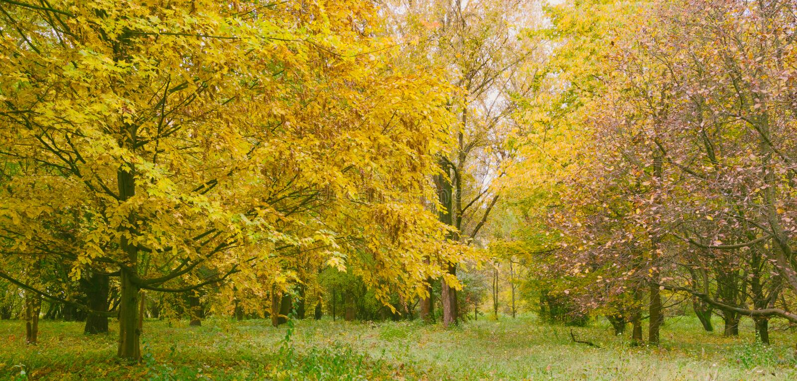 Changing colors of the forest. Vintage autumn season landscape in the Tiszalok Arboretum in Hungary. Hungarian countryside. Fallen yellow leaves stock images