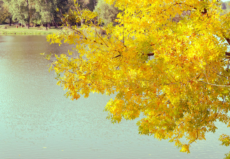 Changing colors. Vintage autumn season landscape at the Tisza backwater in Tiszalok, Hungary. Hungarian countryside. Autumn yellow. Leaves stock photos