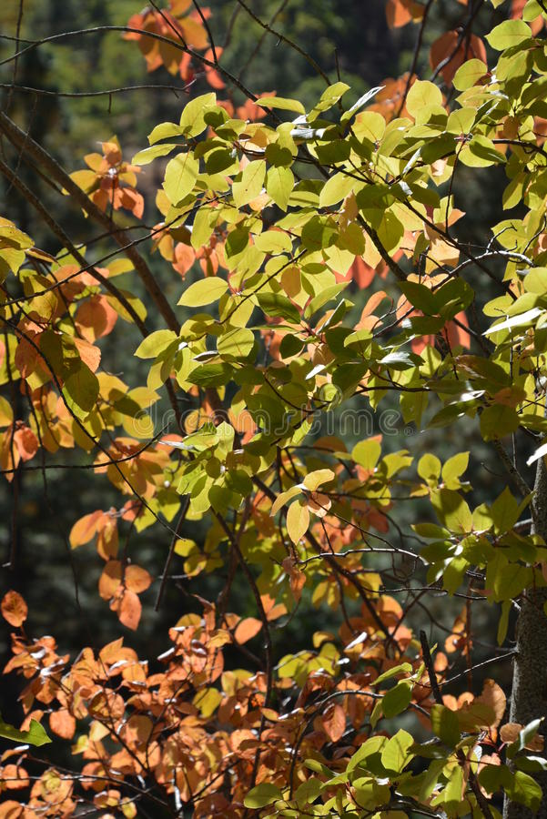 Changing Seasons royalty free stock photography