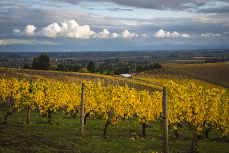 Autumn vineyards, Willamette Valley, Oregon stock photography