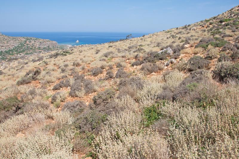 Chania, Crete - Mediterranean plants above the famous Balos beach and lagoon royalty free stock image
