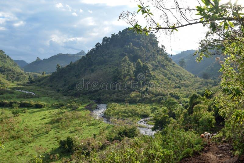 Chania River in Aberdare Ranges, Kenya. Chania River in Chania Nyeri, Aberdare Ranges, Kenya stock image