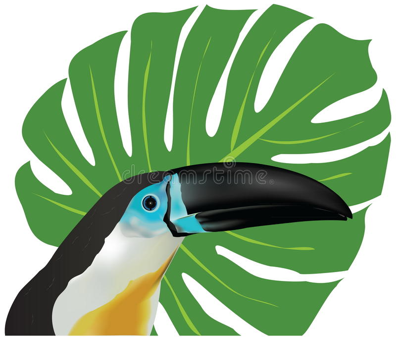Download Channel-billed Toucan stock vector. Illustration of ornithology - 23714799