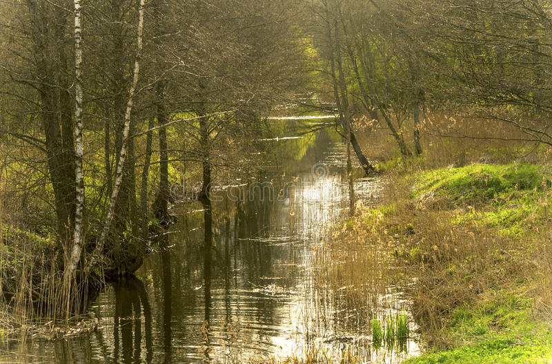 Channel in a forest. On a calm spring evening, Lithuania royalty free stock photos