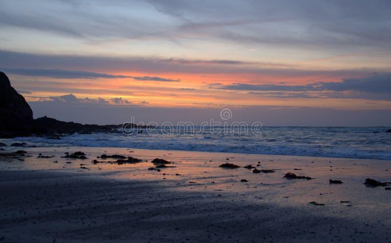 channel islands bydła seascape obrazy stock