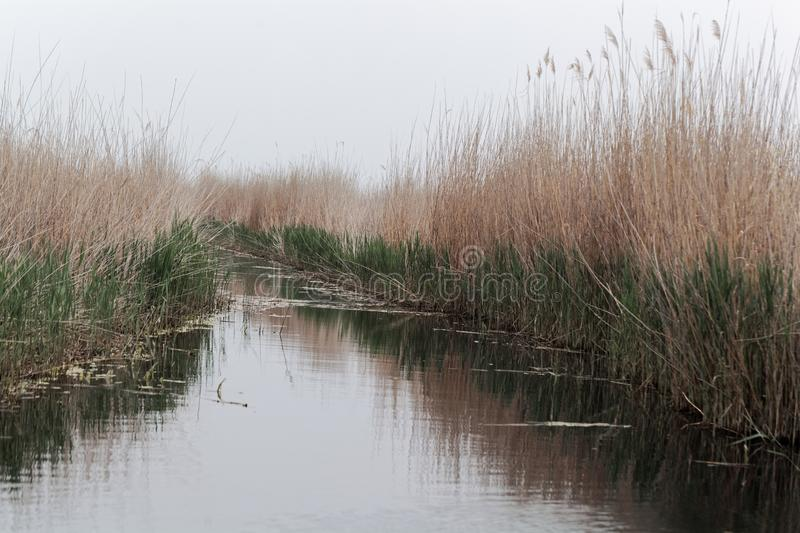 Channel at the southern margin of the lake Neusiedler See. In Hungary royalty free stock image