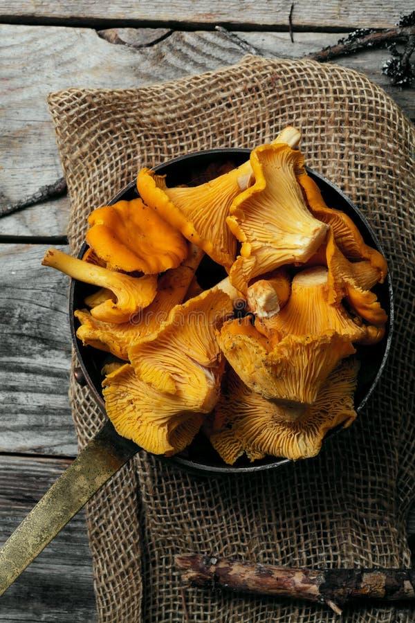 Chantarelle蘑菇 免版税库存照片