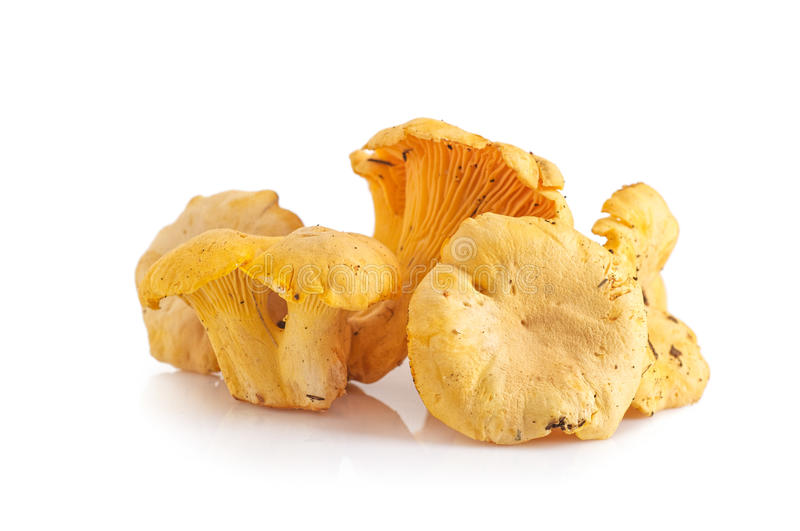 Chanterelle mushrooms on a white royalty free stock photography