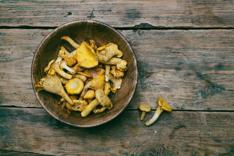 Chanterelle mushrooms on a wooden background. Raw mushrooms in a wooden bowl stock images