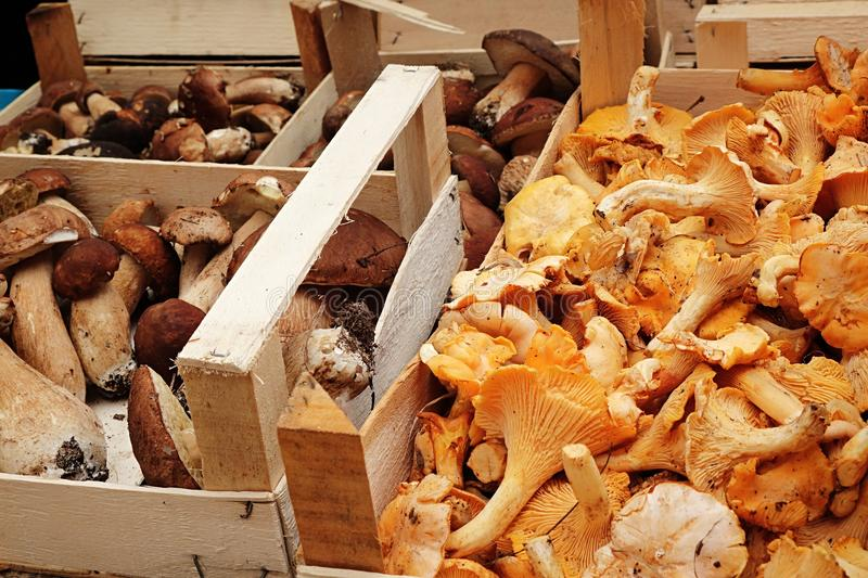 Chanterelle and summer cep mushrooms displayed on marketplace in wooden boxes royalty free stock photography