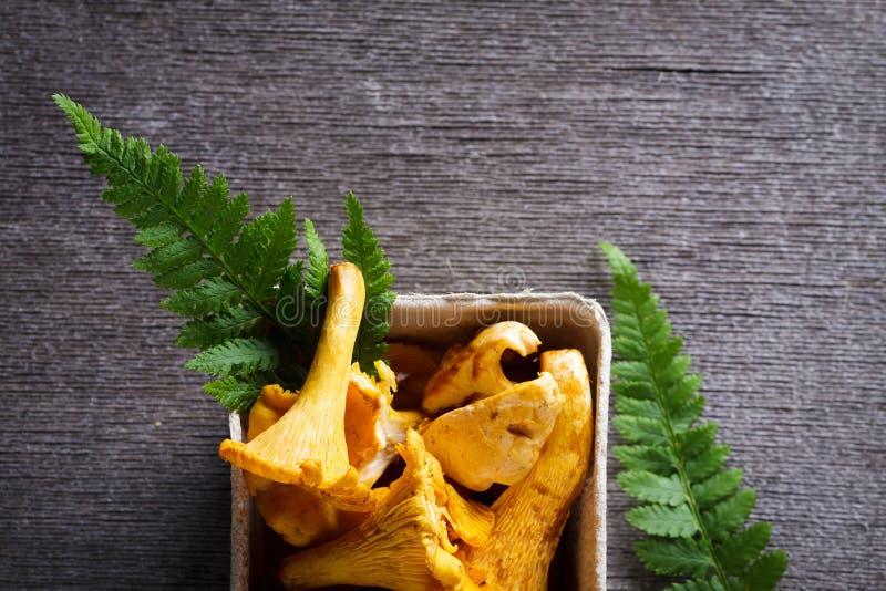 Chanterelle yellow mushroom. Background of Chanterelle yellow mushroom and fern leaf with copy space stock photo