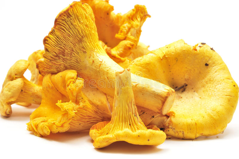 Download Chanterelles stock photo. Image of forest, palatable - 10607246