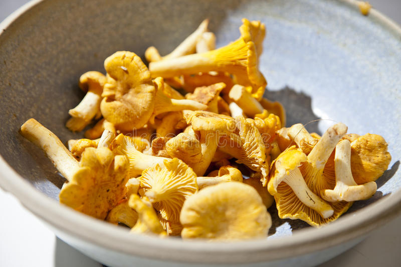 Download Chanterelles Royalty Free Stock Photo - Image: 21063355