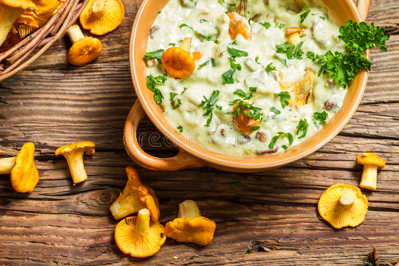 Chanterelles mushroom with cream and parsley are in the forest royalty free stock photography