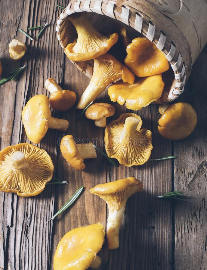 Chanterelles on vintage wooden background top view, healthy food on table mockup, orange mushrooms isolated on rustic country stock photo