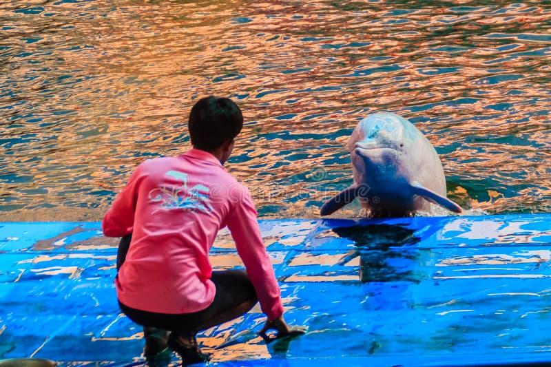 Chanthaburi, Tailandia - 5 de mayo de 2015: El instructor está enseñando al delfín imagenes de archivo