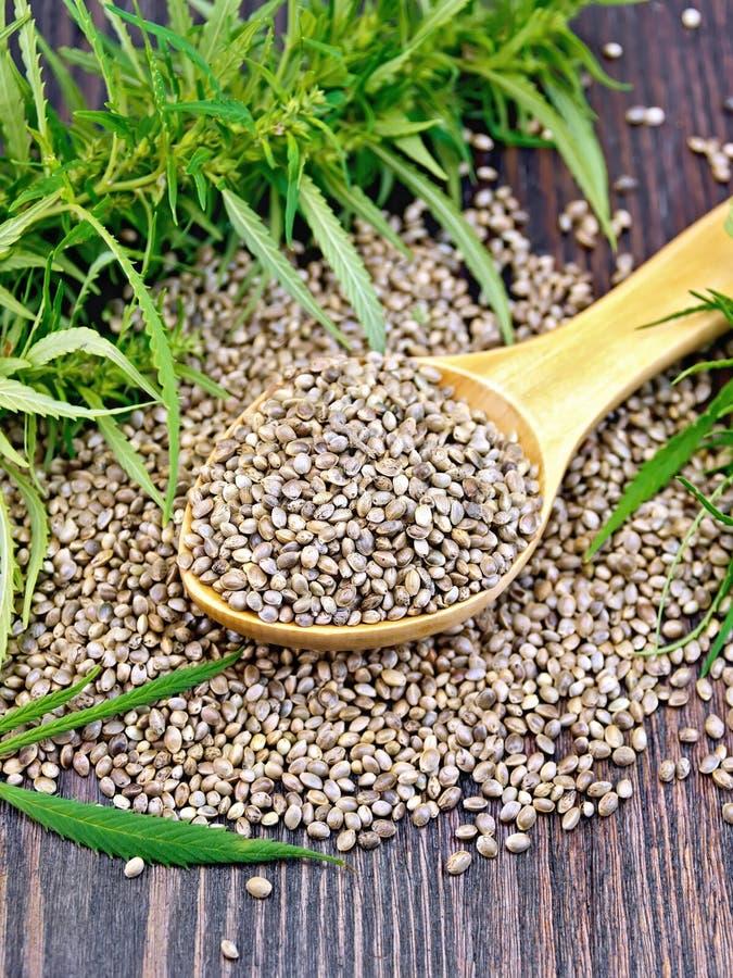 Chanvre de grain dans la cuillère avec la feuille à bord photos libres de droits