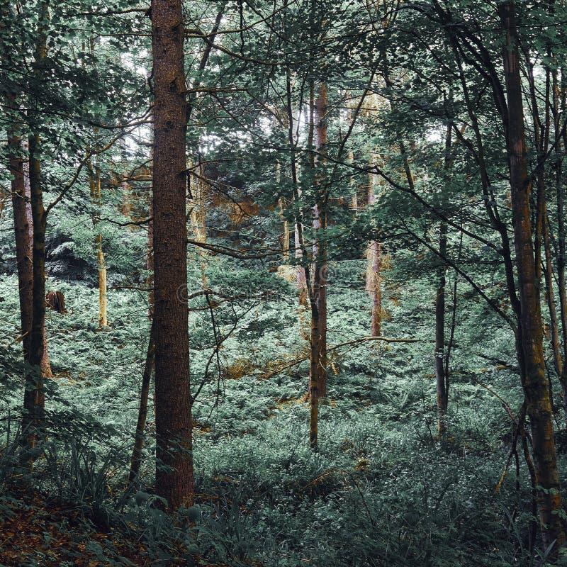 Chaotische bossen van groene luifel royalty-vrije stock fotografie