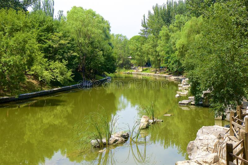 Chaoyang park, Beijing. Beautiful nature in Chaoyang park, Beijing, China royalty free stock image