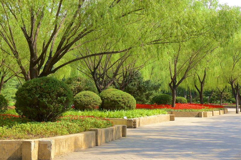Chaoyang park, Beijing. Paths in Chaoyang park and the flowers in bloom, Beijing, China royalty free stock photography