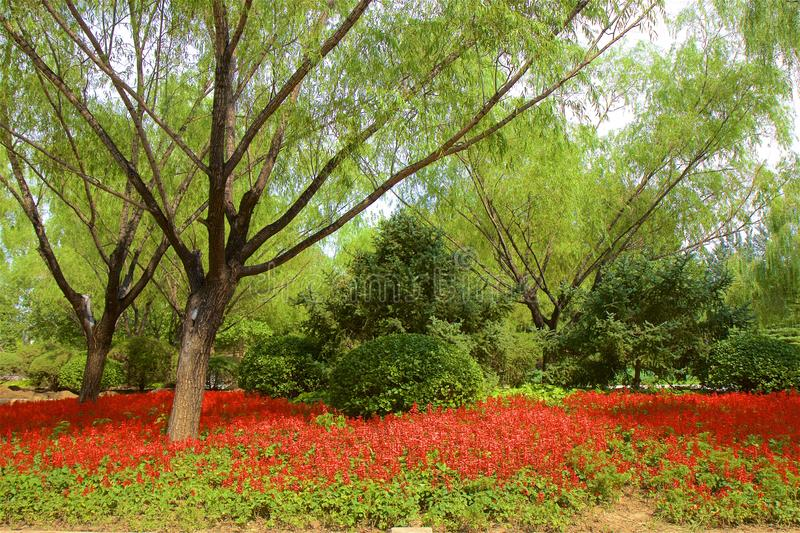 Chaoyang park, Beijing. Paths in Chaoyang park and the flowers in bloom, Beijing, China stock image