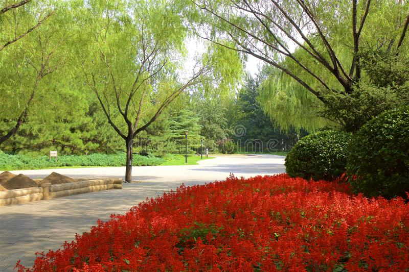 Chaoyang park, Beijing. Paths in Chaoyang park and the flowers in bloom, Beijing, China royalty free stock photo