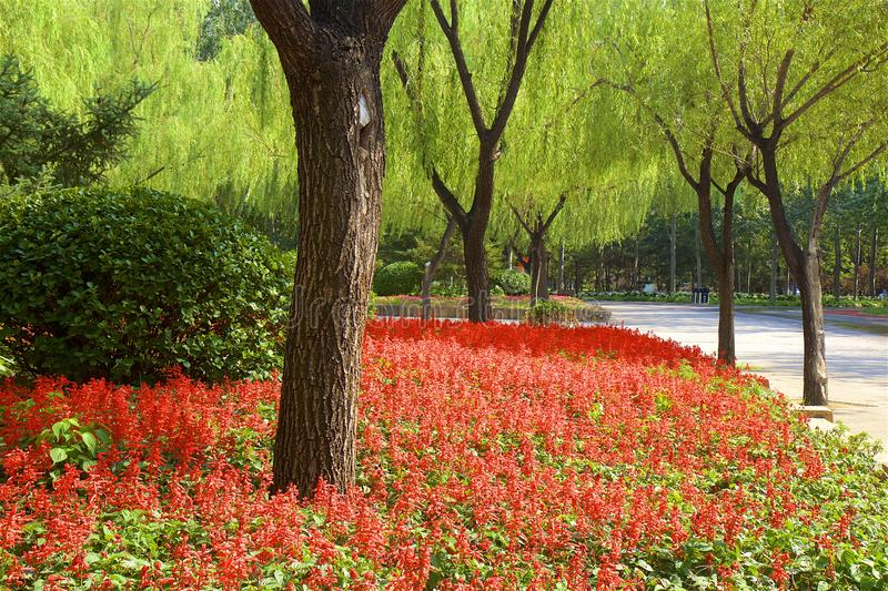 Chaoyang park, Beijing. Paths in Chaoyang park and the flowers in bloom, Beijing, China royalty free stock images