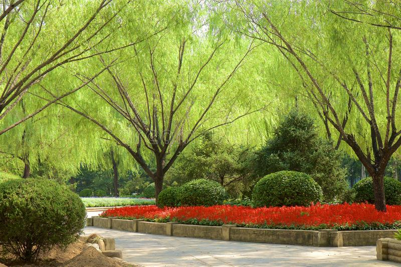Chaoyang park, Beijing. Paths in Chaoyang park and the flowers in bloom, Beijing, China stock photography
