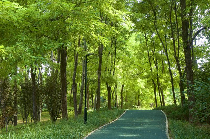 Chaoyang park, Beijing. Paths in Chaoyang park and the forest Beijing, China stock photography