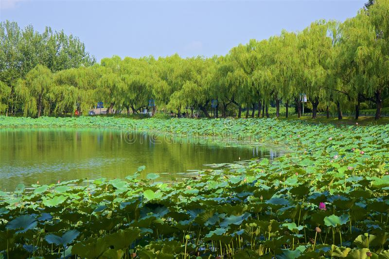 Chaoyang park, Beijing. Summer day in Chaoyang park, Beijing royalty free stock photography