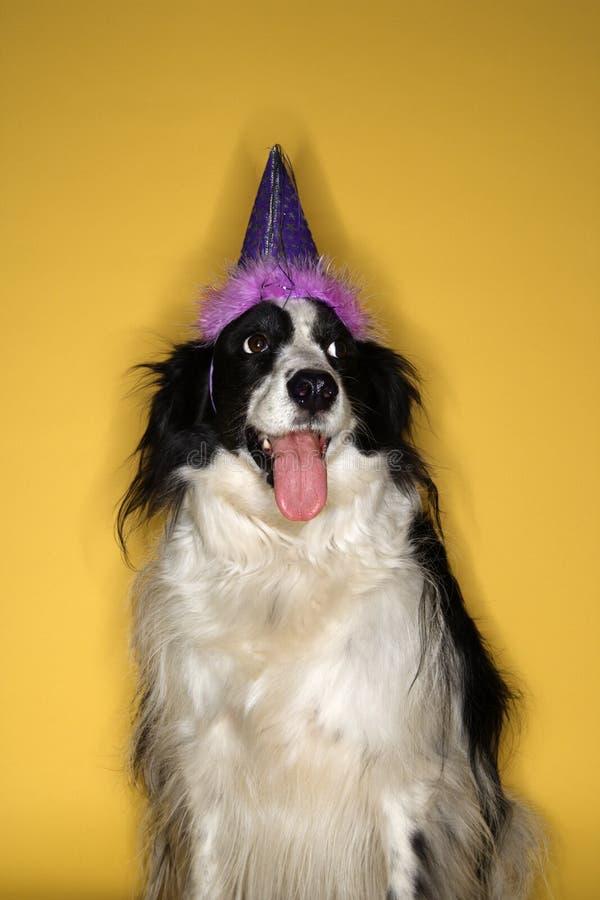Chapéu desgastando do partido do cão. fotografia de stock