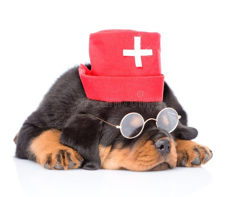 Chapéu médico vestindo das enfermeiras do cão de cachorrinho do rottweiler do sono Isolado no branco foto de stock