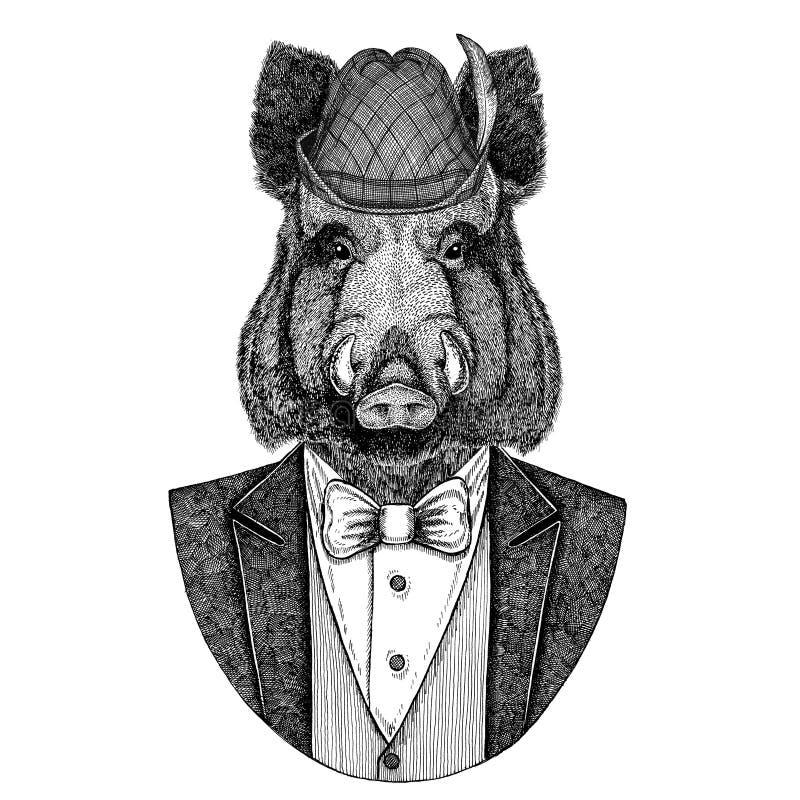 Chapéu nacional bávaro Aper do chapéu de Tirol do alemão, varrão, porco, boaraper selvagem, varrão, porco, imagem tirada mão do j ilustração stock