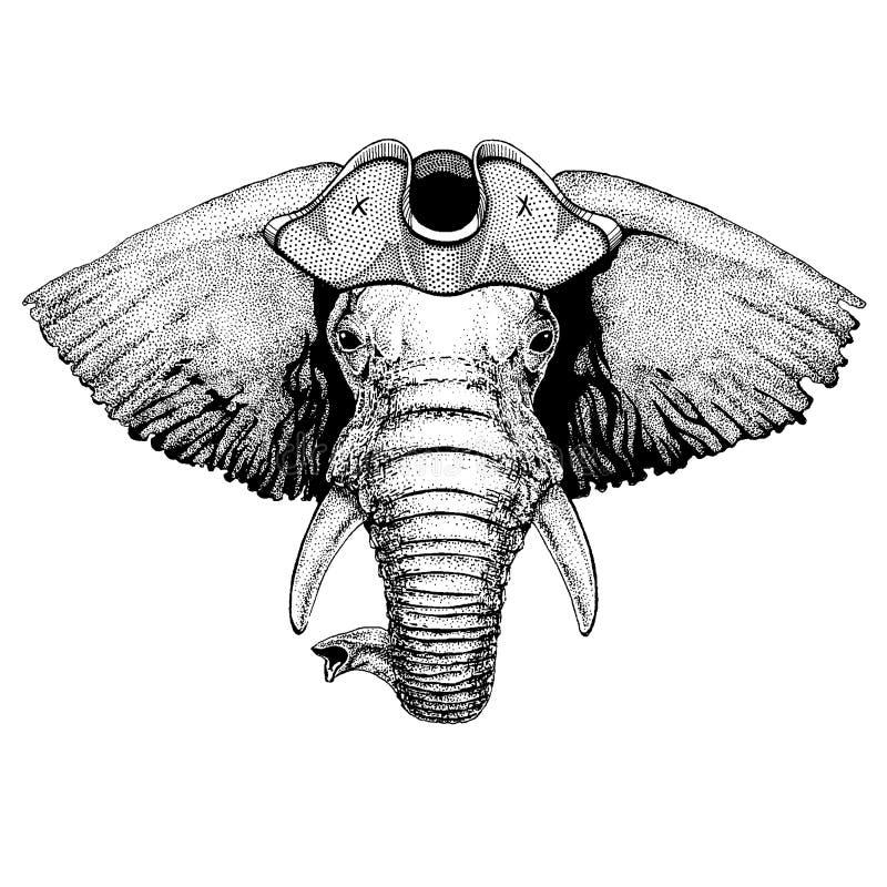 Chapéu tricorn vestindo do pirata do elefante africano ou indiano Traje de Capitan ilustração stock