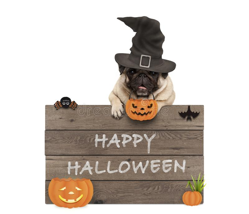 Chapéu vestindo da bruxa do cão bonito do pug com placa de madeira e texto o Dia das Bruxas feliz foto de stock royalty free