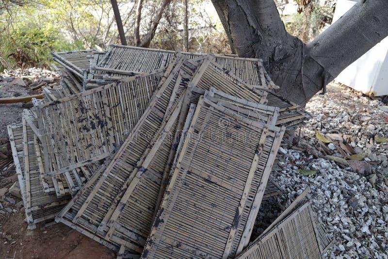 Chapa de bambu fotografia de stock