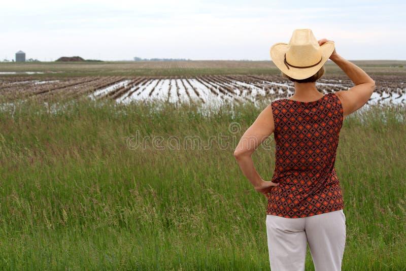 Chapeau de cowboy de participation de femme regardant un champ de ferme complètement de l'eau images stock