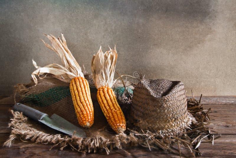 Chapeau de pelle à maïs photo libre de droits