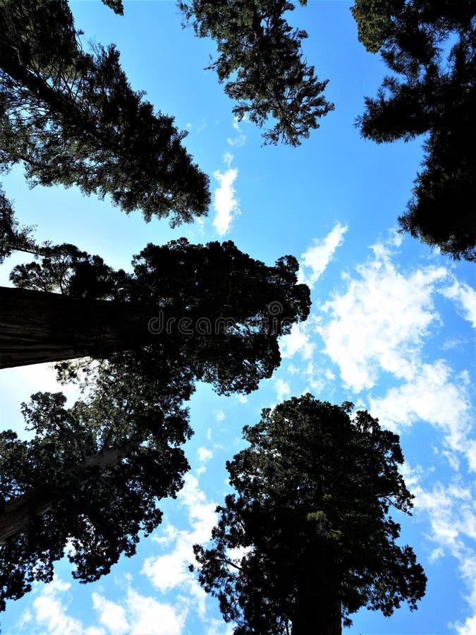 Chapeaux de nuage au-dessus des séquoias photographie stock