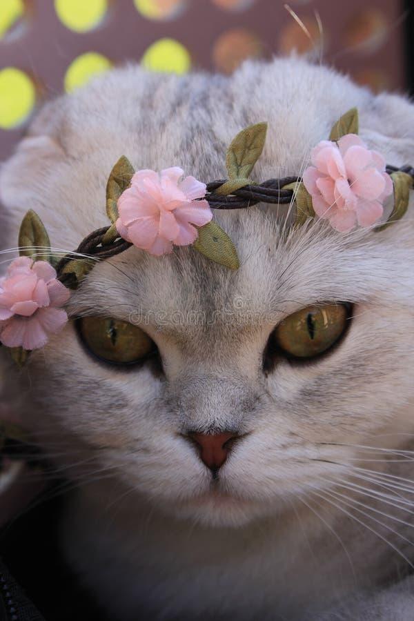 Chaplet котенка нося стоковое изображение