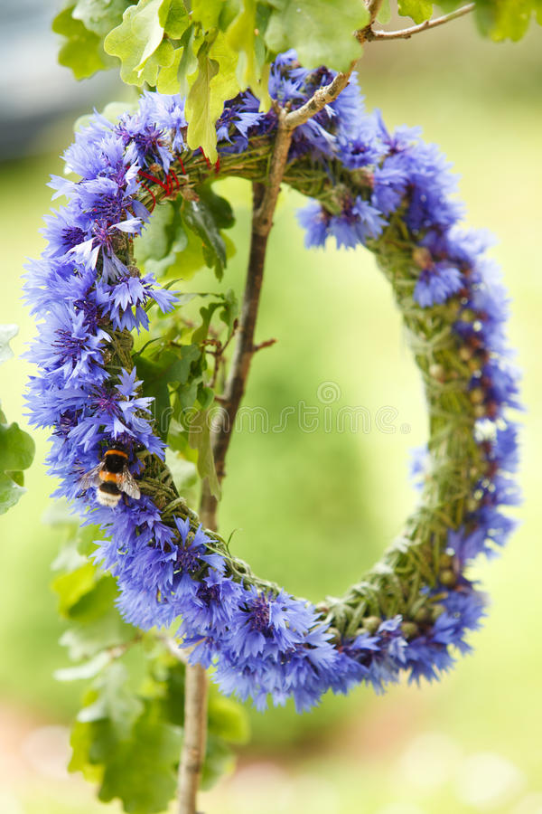 Free Chaplet From Blue Cornflowers Royalty Free Stock Image - 15086906