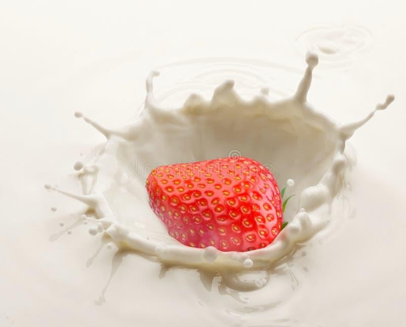 Chapoteo de la fresa en la leche fotos de archivo