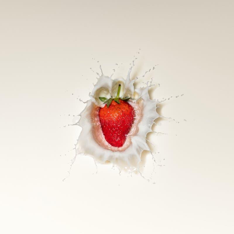 Chapoteo de la fresa en leche imágenes de archivo libres de regalías