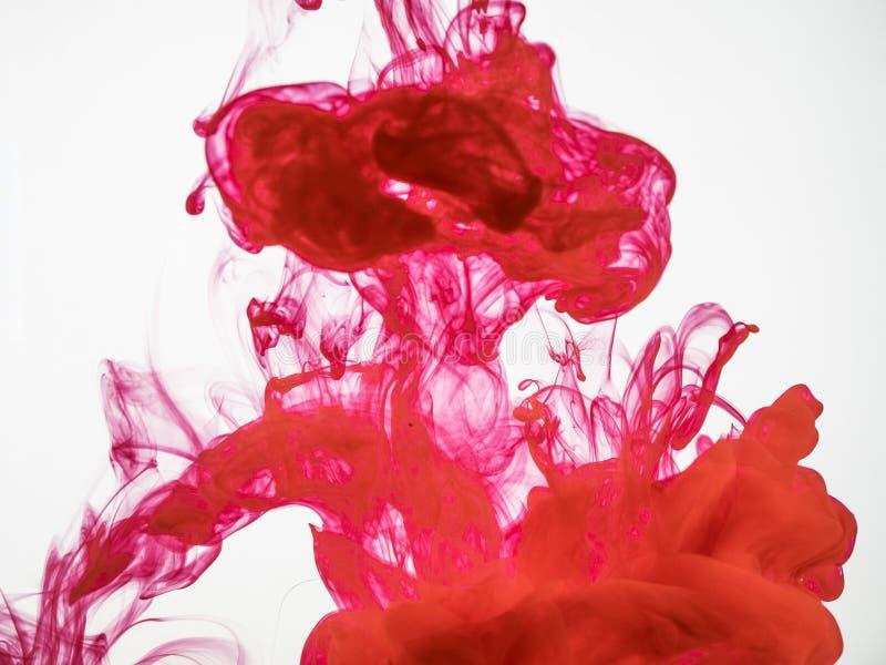 Chapoteo de la tinta de acrílico roja debajo del agua aislada en el fondo blanco Tinta roja caída en el agua y fotografiada mient fotos de archivo