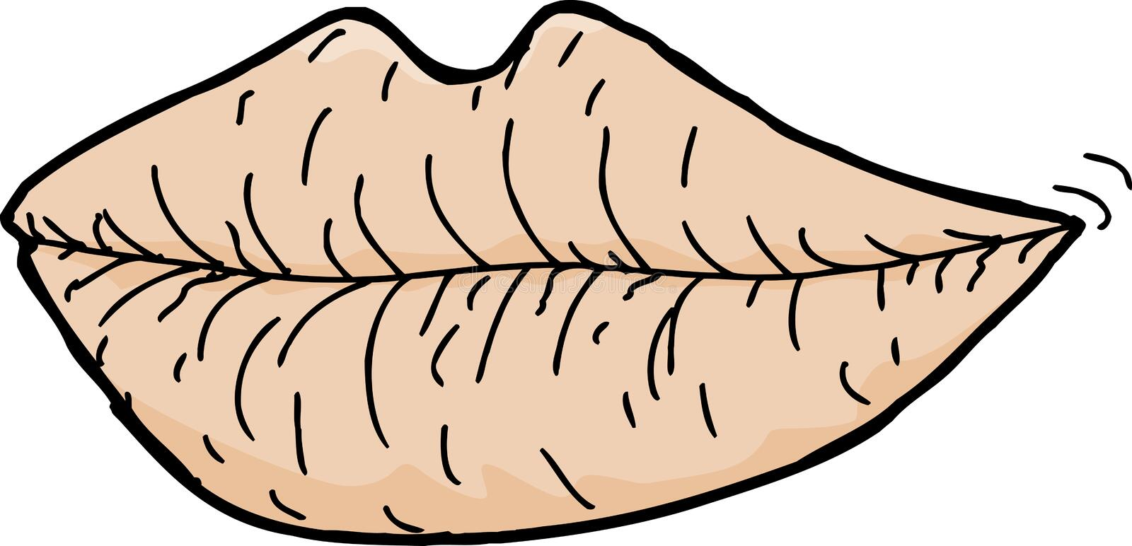 Chapped Lips. Cartoon of chapped lips on white background royalty free illustration