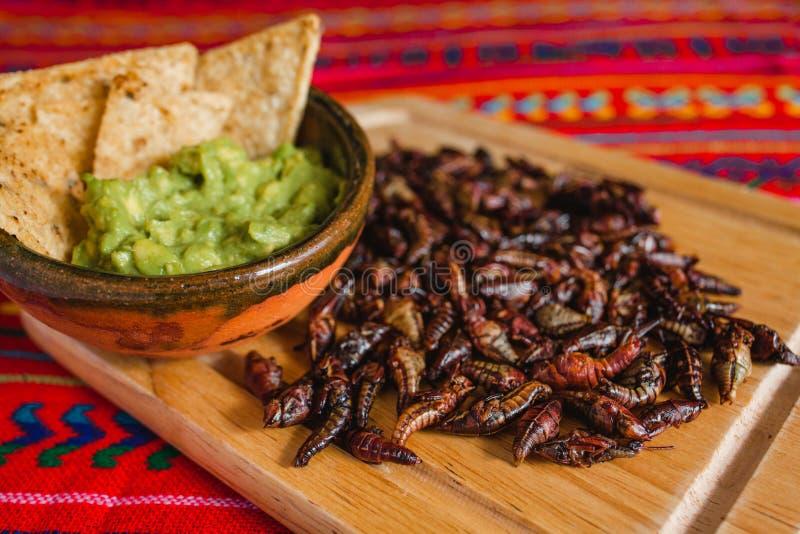 Chapulines、蚂蚱和鳄梨调味酱捣碎的鳄梨酱快餐传统墨西哥烹调从瓦哈卡墨西哥 免版税库存图片