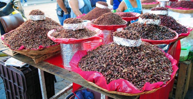 Chapulines,墨西哥食物 免版税库存图片
